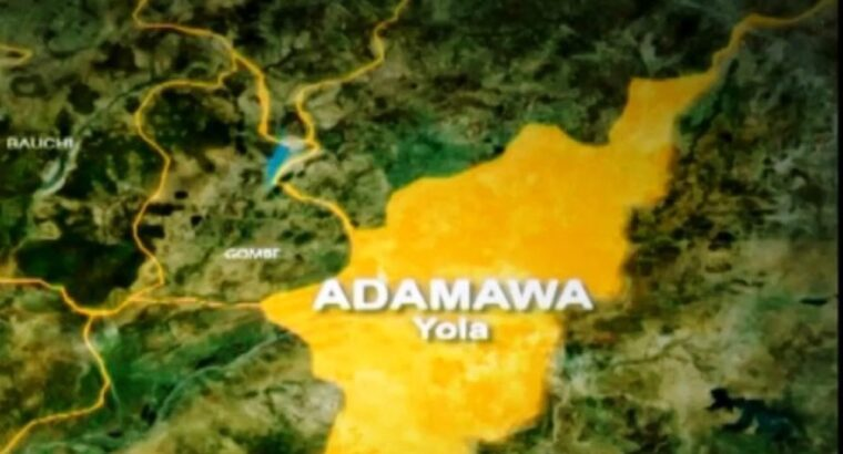 NGOs launch dialogue against communal conflicts in Adamawa