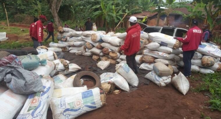 NDLEA storms warehouse, nabs two with 524 bags of Indian hemp in Ondo