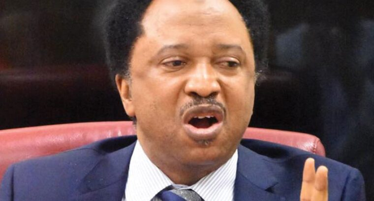 Tokyo Olympics: Shehu Sani reacts as Nigeria's Enekwechi washes his only jersey ahead of shot put final [VIDEO]